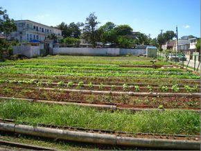 urban-farms-cuba